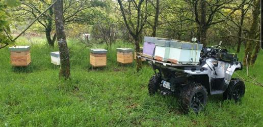 Quad apiculture